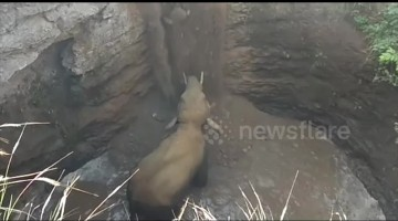 Terrified baby elephant rescued after falling into 30-foot well in south India