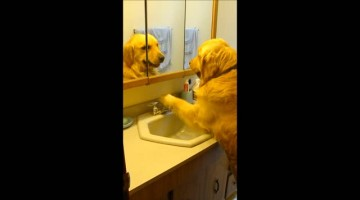Clever dog turns on sink faucet whenever he's thirsty