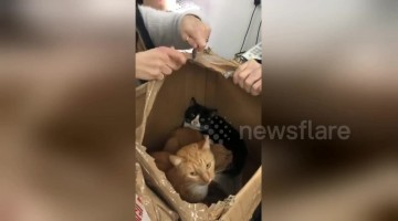 Nearly a dozen cats rescued after being left for dead in alleyway