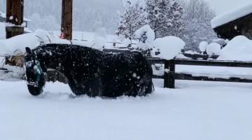 Horses Frolic in Freshly Fallen Snow
