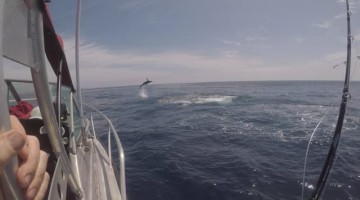 Mako Shark Goes Airborne Trying to Unhook Itself