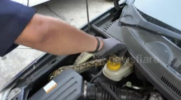 Driver left in shock after finding large python curled up in his car engine
