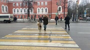 Dog's Strange Way of Walking