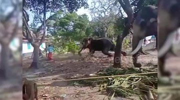 Elephant attacks man as he gets close to take picture in southern India