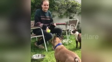 Human and dog play catch together in UK garden
