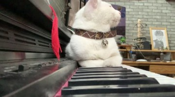 Man Serenades Cat with Sweet Song on Piano