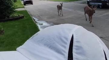 Random Deer Join Run