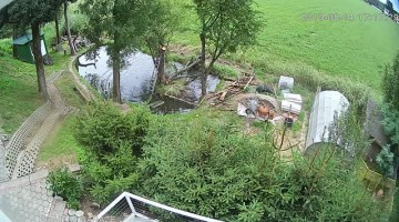 Tree Trimmer Tumbles into Pond