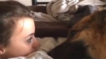German Shepherd whines town owner about her