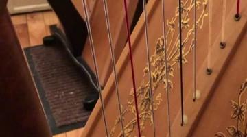 Cat Plays the Harp