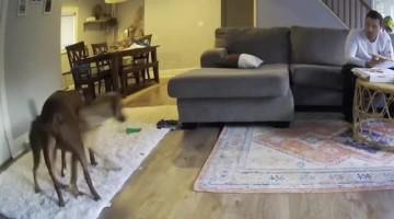 Dogs Perform Impromptu Dance