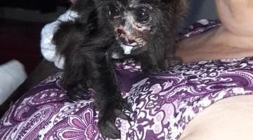 Rescued Howler Monkey Infant Enjoys a Meal