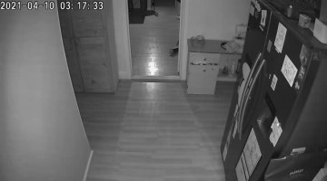 Fox That Breaks into House is Chased by Dog