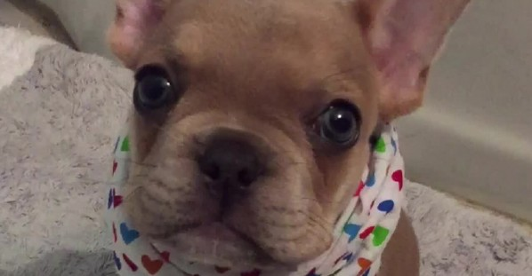 Adorable puppy tries his best to say
