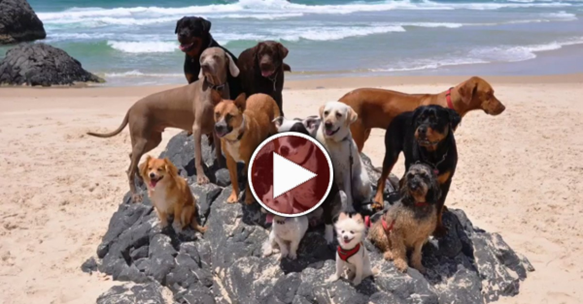 Dogs And A Cat Dance To Happy By Pharrell Williams
