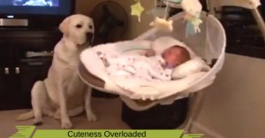 Cute : A dog reacts to a New Born Child