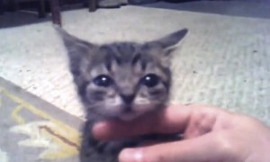 A Cat That Never Grows Up? You Can't Handle This Cuteness!