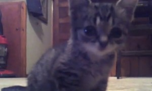 This kitten will NEVER grow old. Meet \'Lil BUB\' when she was just 8 weeks old.