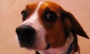 The Happiest Dog In The World Gets The Surprise Of A Lifetime! Its Reaction is Priceless