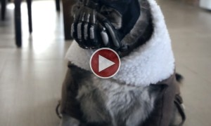 Watch The Bane Cat Terrorize Its Owner