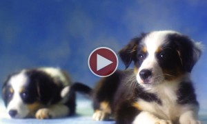 Watching This Video Will Help Raise Charity For Dogs