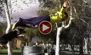 Watch An Amazing Parkour Performance By A Dog!