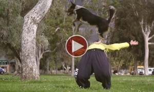 Watch This Incredible Parkour Performance By A Dog!