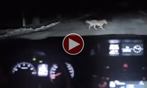 This Woman Drives Over A Dog. You Would Want To See What Happens Next!