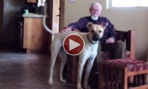 Watch This Heart Wrenching Conversation A Man With  Alzheimers Has With His Dog