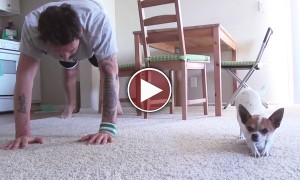 A Man And His Chihuahua Do Yoga Together