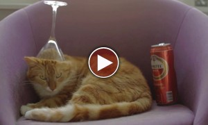 Hipster Cat Gets Drunk And Does What It Does Best!