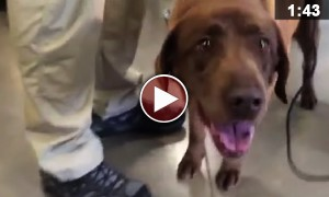 This Iraq Veteran Reuniting With His Bomb Sniffing Dog Will Be The Best Thing You Will See Today