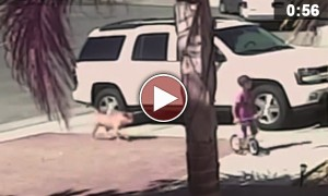 Cat Saves Boy's Life By Attacking A Dog. Incredible!
