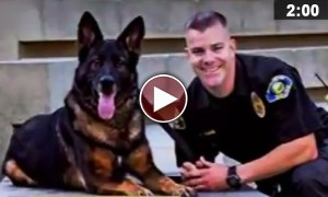 Watch This Extraordinary Story Of A Hero Dog! Incredible