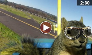 A Squirrel Hijacks A Plane And What Happens Next Will Leave You Speechless