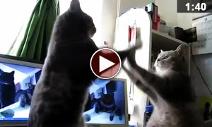 Cats Playing The French Version Of 'Pattycake' Is The Best Thing You Will See Today!