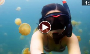 Spectacular Footage Of A Diver Lost In A Jellyfish Lake Will Blow Your Mind