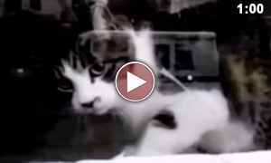 This Battle Between A Mailman And A Guardcat Is The Funniest Thing Ever!