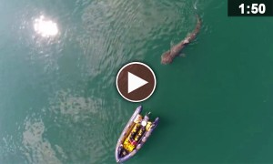 My Friend Took His Drone Out To Sea And Captured The Coolest Shark Video EVER!
