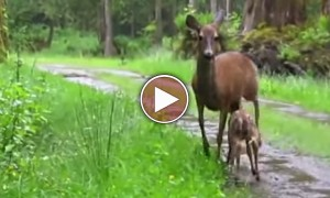 When I See Humans Act like This To Animals, It Breaks My Heart In A Good Way