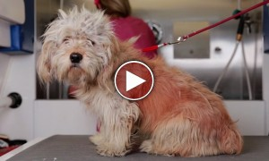 Homeless Dog Gets A Makeover That Saved His Life. Absolutely Beautiful To Watch