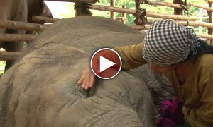 Woman Sings The Sweetest lullaby I've Ever Heard To Put An Elephant To Sleep. Incredible