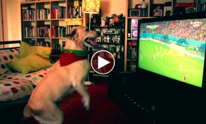 This Lab Couldn't Be Happier After Portugal Scored A Goal In The 95th Minute!
