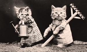 Vintage Cuteness: 22 Adorable And Hilarious Pictures Of Kittens And Puppies