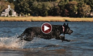 Watch: Hero Dog Rescues A Bird From Drowning!