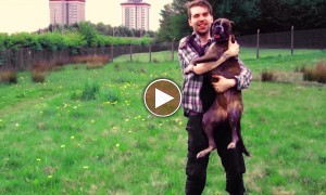 This Powerful Video Shows Us How To Properly Raise A Dog! A Must Watch!