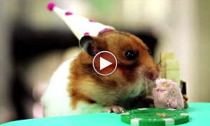 Tiny Birthday Party For A Tiny Hedgehog Is So Cute It Hurts!