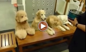 These Dogs Are Really Precious!! So Much We Can Learn From Them