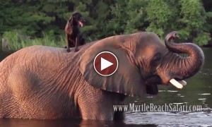 An Elephant And A Dog Are Best Friends. Unbelievable!!