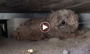 What Happened To This Blind Dog Was Absolutely UNEXPECTED!!